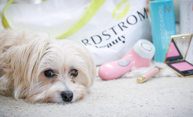 morkie with beauty products july favorites