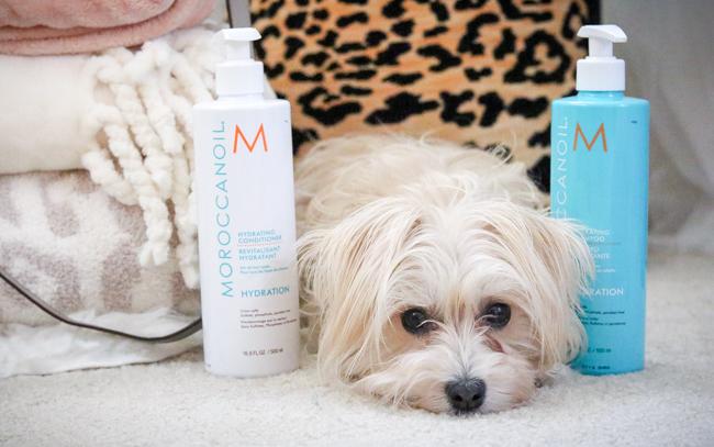 moroccanoil shampoo and conditioner